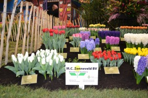 NLG Holland at Spring Garden Breezand